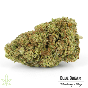 blue-dream-clones-maine-207