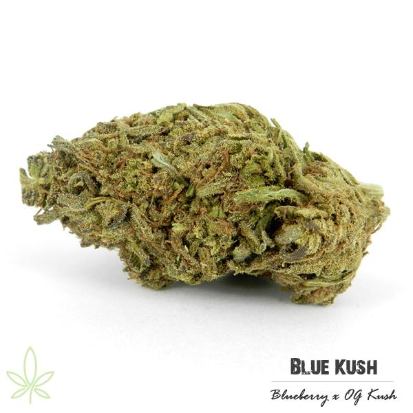 blue-kush-clones-maine-207
