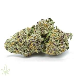 purple-punch-clones-cannabis-marijuana-maine