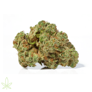 707-headband-cannabis-clones-for-sale