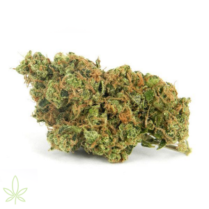 christmas-diesel-cannabis-clones-for-sale-maine-california