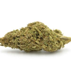 cinderella-99-cannabis-marijuana-clones-maine