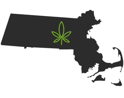 massachusets-cannabis-clones