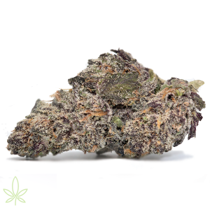 Gelato 33 – Larry Bird Cut