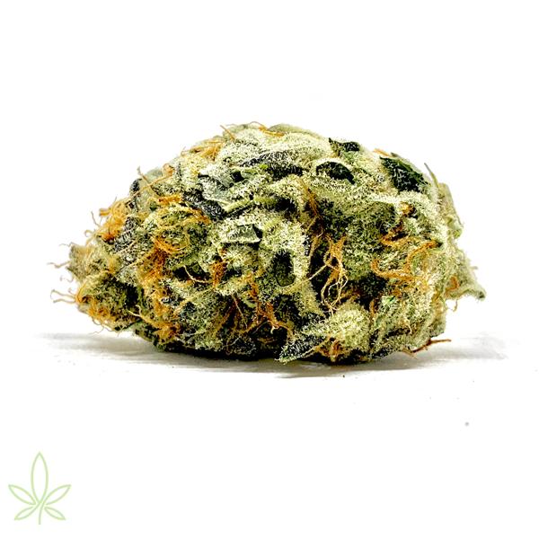 grape-do-si-dos-cannabis-clones-for-sale-maine-california-alaska-mass