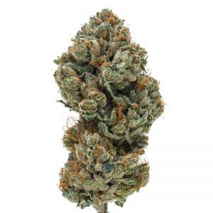 wifi-43-cannabis-clones-jungle-boys