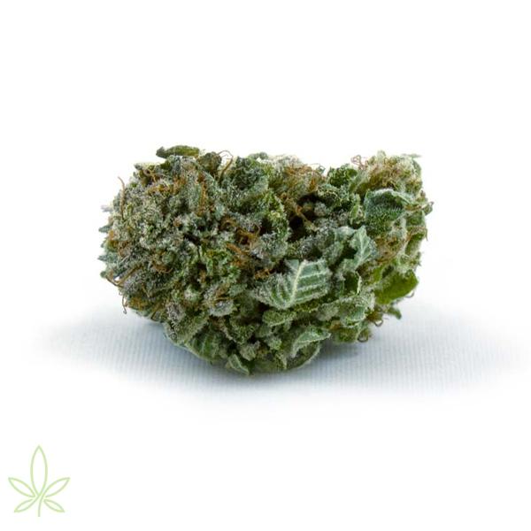 ac-dc-cannabis-strain-high-cbd