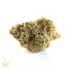 chem-dog#4-cannabis-clones-for-sale-maine-207