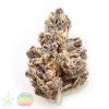 putang-mass-medical-strains-cannabis-clones-for-sale
