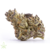 dolato-cannabis-clones-for-sale