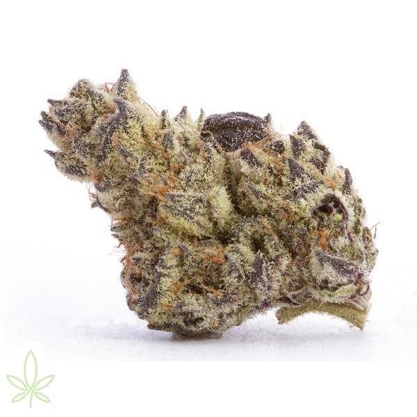 dolato-cannabis-clones-for-sale