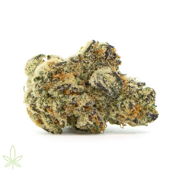 dosidos_cannabis_clones_maine