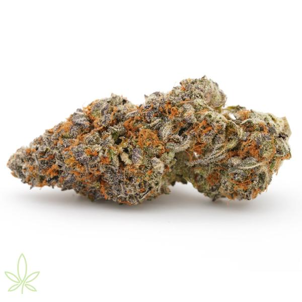 Garanimals-cannabis-clones-for-sale-maine