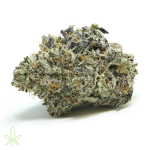 ice-cream-cake-cannabis-clones-for-sale-maine-mass