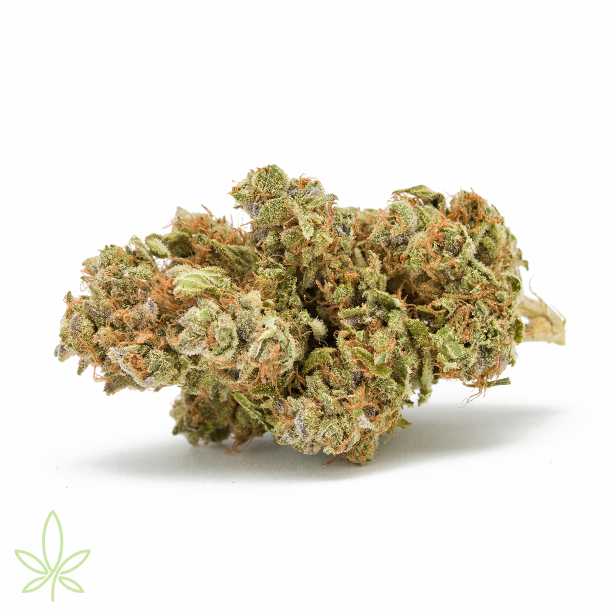 MOB-Mother-of-berries-cannabis-clones-maine-for-sale-3