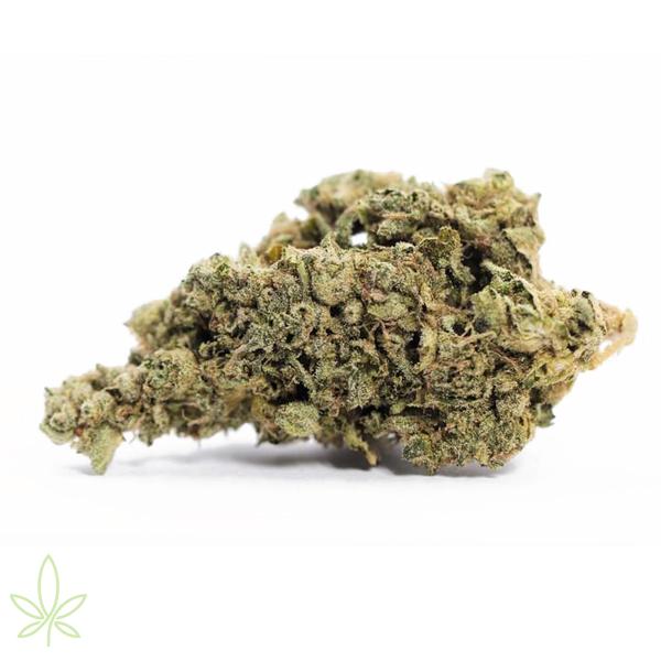 black-lime=-reserve-clones-for-sale-maine-cannabis-seedlings-hemp-seeds-cbd-plants-nursury