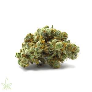 GMO-cannabis-clones-maine