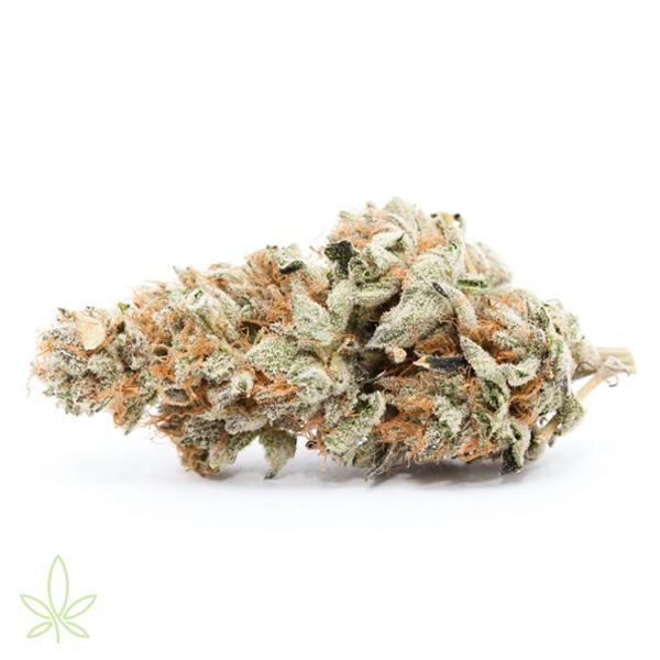 slurricane-cannabis-clones-for-sale-maine-mass-cali-michigan