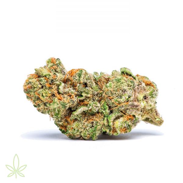 Lava-cake-cannabis-clones-maine-for-sale