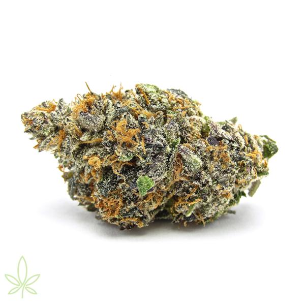 OGKB--og-kush-breath-cannabis-clones-maine