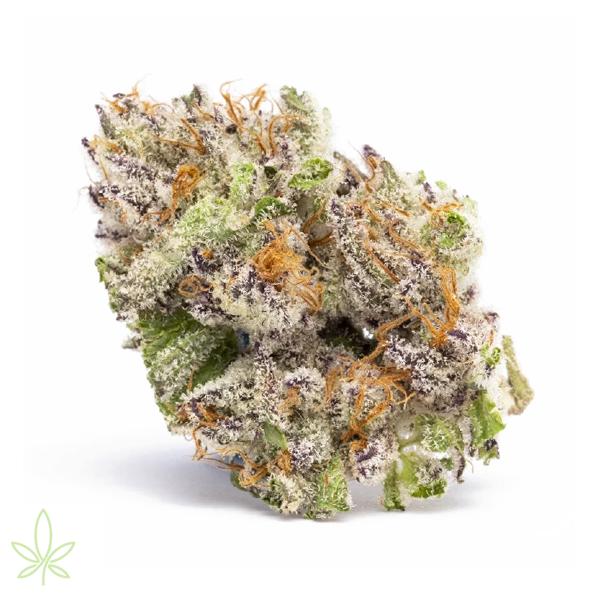 lavacake-cannabis-clones-for-sale