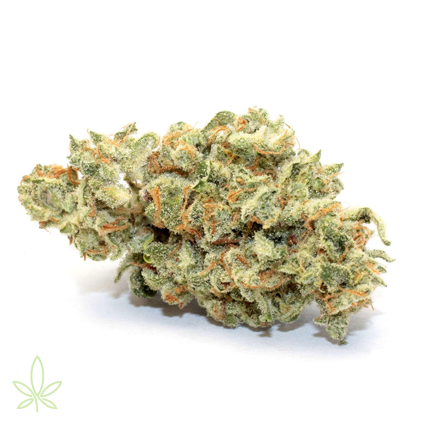 melonade-cannabis-clones-for-sale-maine-mass-cali-michigan