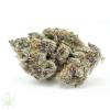 tropicanna-cookies-cannabis-clones-for-sale-1