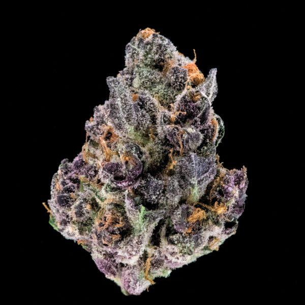 tropicanna-cookies-cannabis-clones-for-sale-maine
