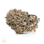 mimosa-cannabis-clones-for-sale-maine-featured-img-600x600