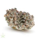 watermelon-zkittles-cannabis-clones-for-sale-maine-2
