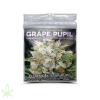 Grape Pupil - Mass Medical