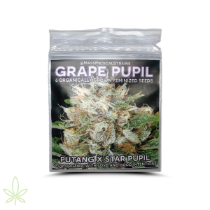 Grape Pupil – Mass Medical