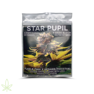 Star Pupil – Mass Medical