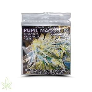 Pupil Magoo – Mass Medical
