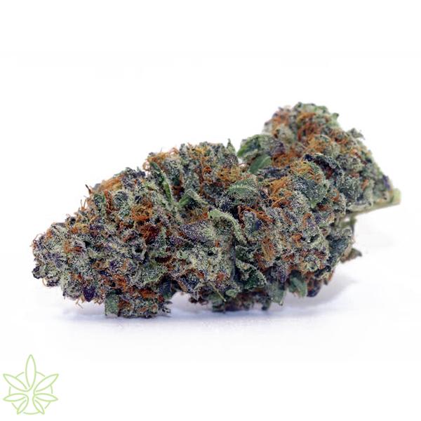 whoasiwhoa-cannabis-clones-for-sale-maine