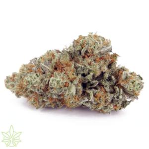 Flinstones-cannabis-clones-for-sale