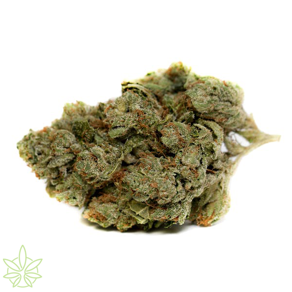 ghost_og_clones_for_sale_maine_mass_bud