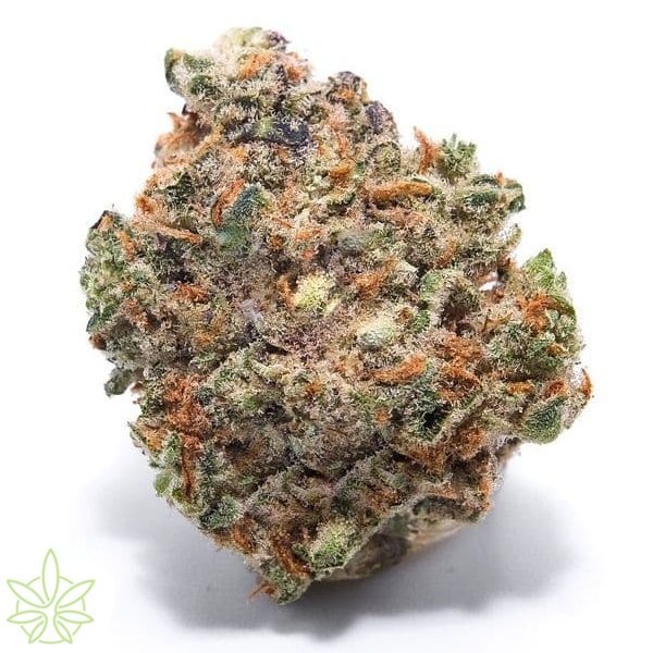 grape-sorbet-cannabis-clones-for-sale-maine
