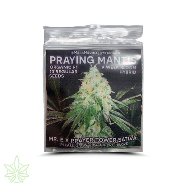 mass medical strains praying mantis seeds